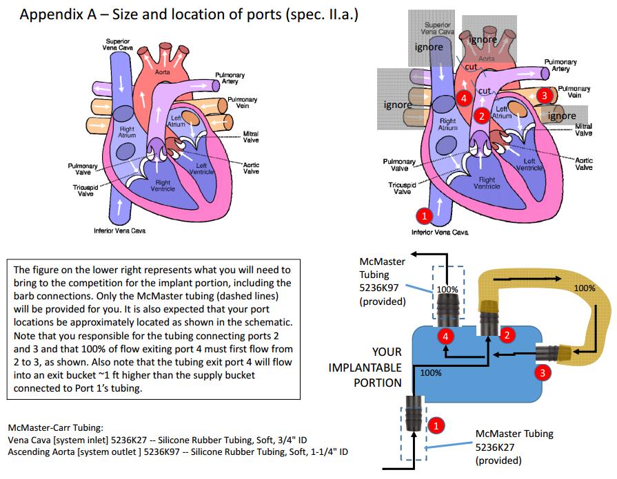 heart-schematic