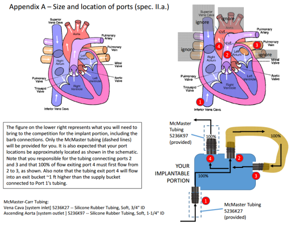 heart-schematic